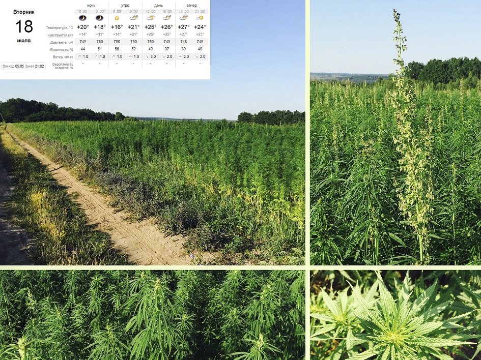 chempconsulting - study of the profitability of the cultivation of hemp for high-quality fiber-2017-07-18